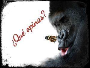gorilamariposaopinas