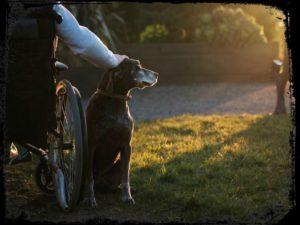 mejor-fotografo-de-perros