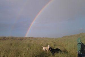 perros-morir-puente-del-arcoiris