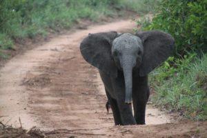 south-africa-elefante-bebe