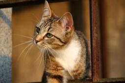 gatos comunicación con animales