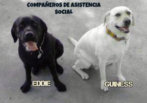 eddie-izquierda-y-guinness