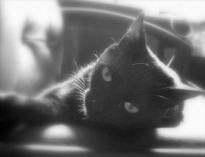 mis-gatos-sabrina-bequir-3