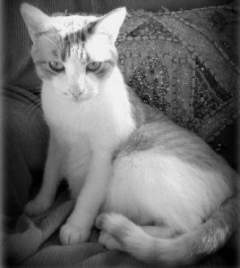 mis-gatos-sabrina-bequir-4