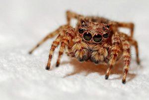 Comunicación interespecies con Arañas