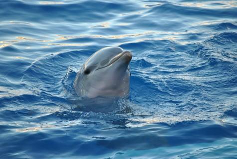 dolphin-tres