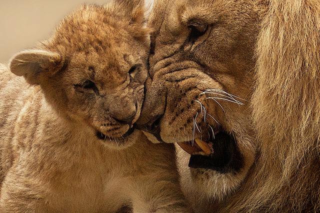 leon-bebe-intucion