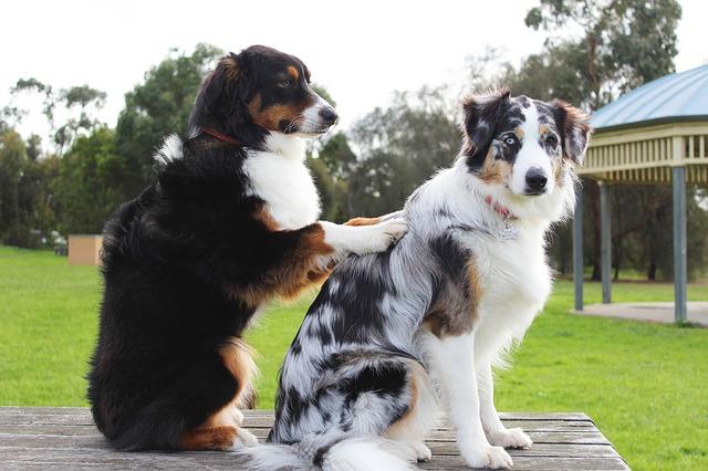 Como dar masajes a tu perro.