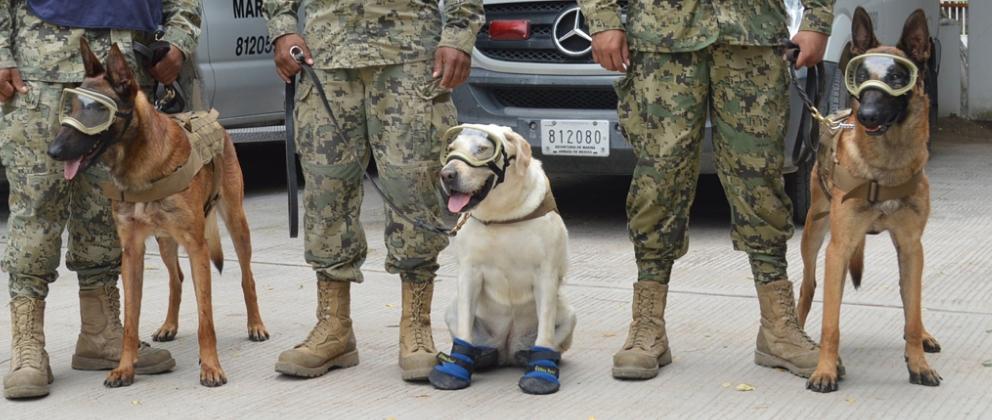 Nuestros perros en el sismo 19-S Ciudad de México