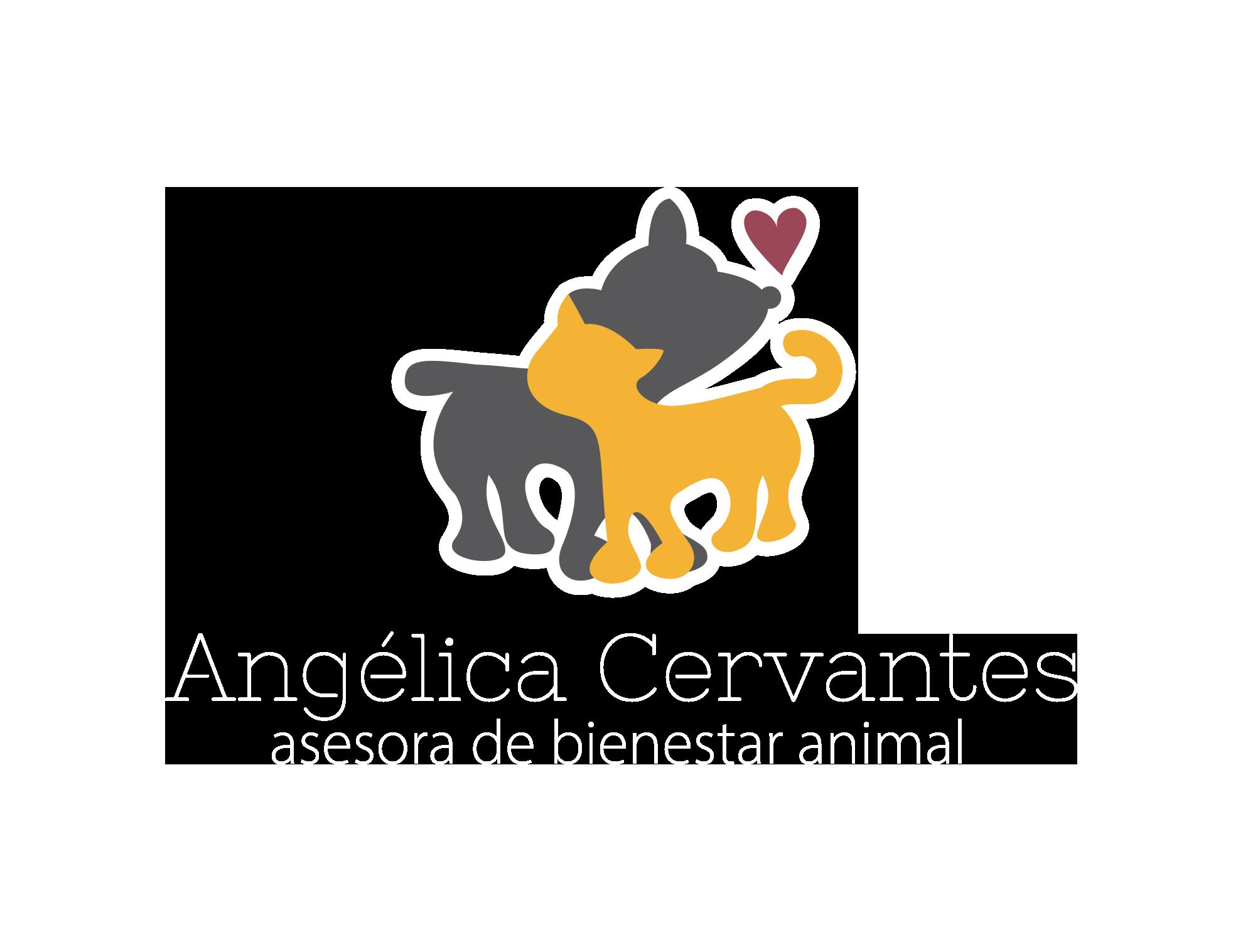 Angelica Cervantes Bienestar Animal