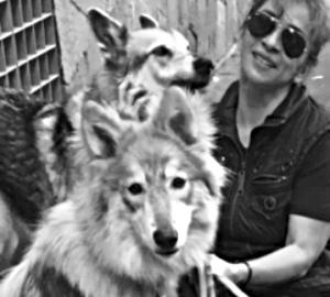 Perros Lobo: Mi experiencia